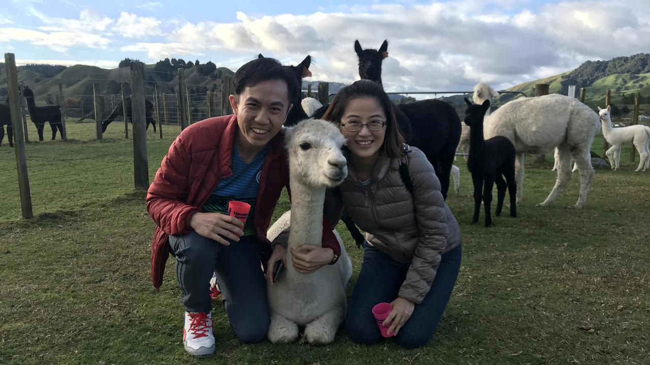 Join us for your Ultimate Alpaca Experience