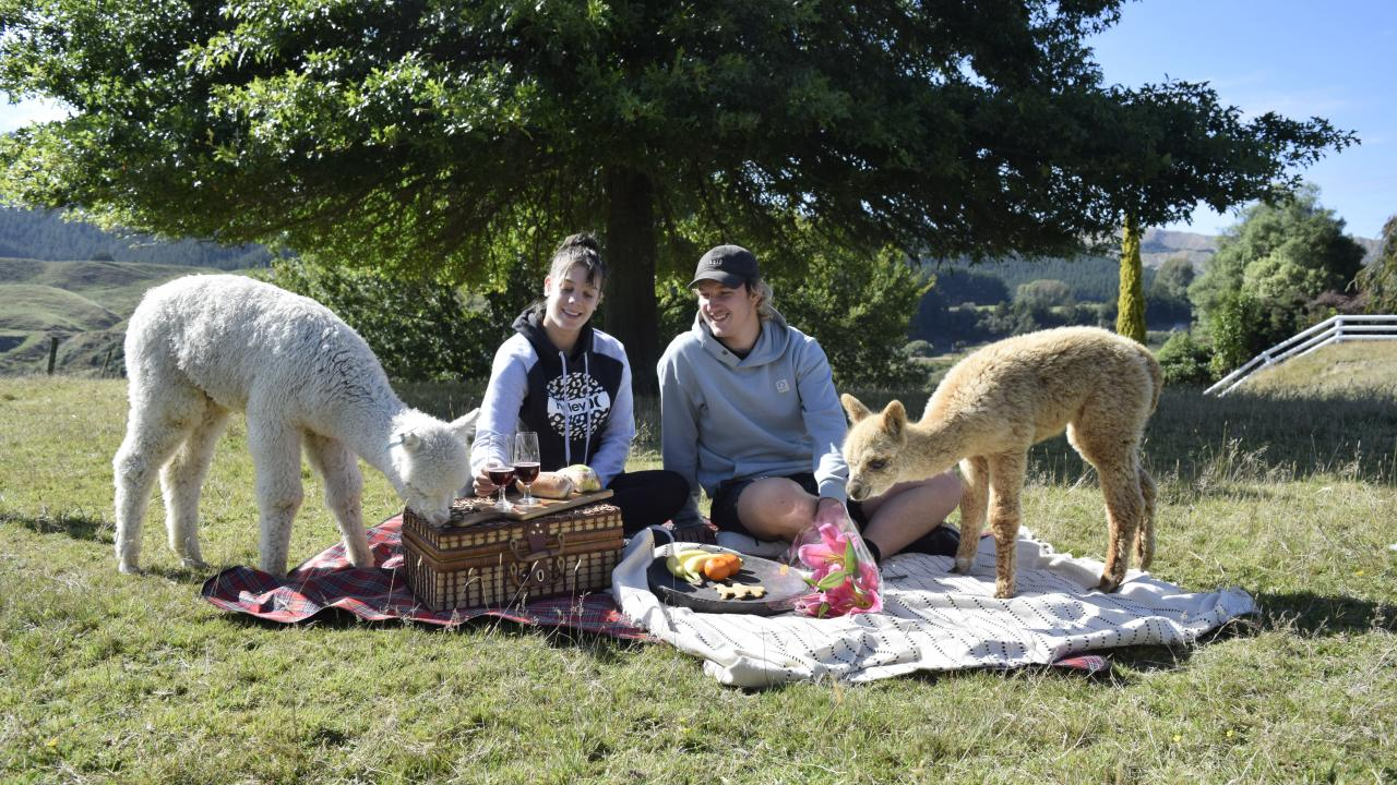 Sit back and relax with an alpaca picnic