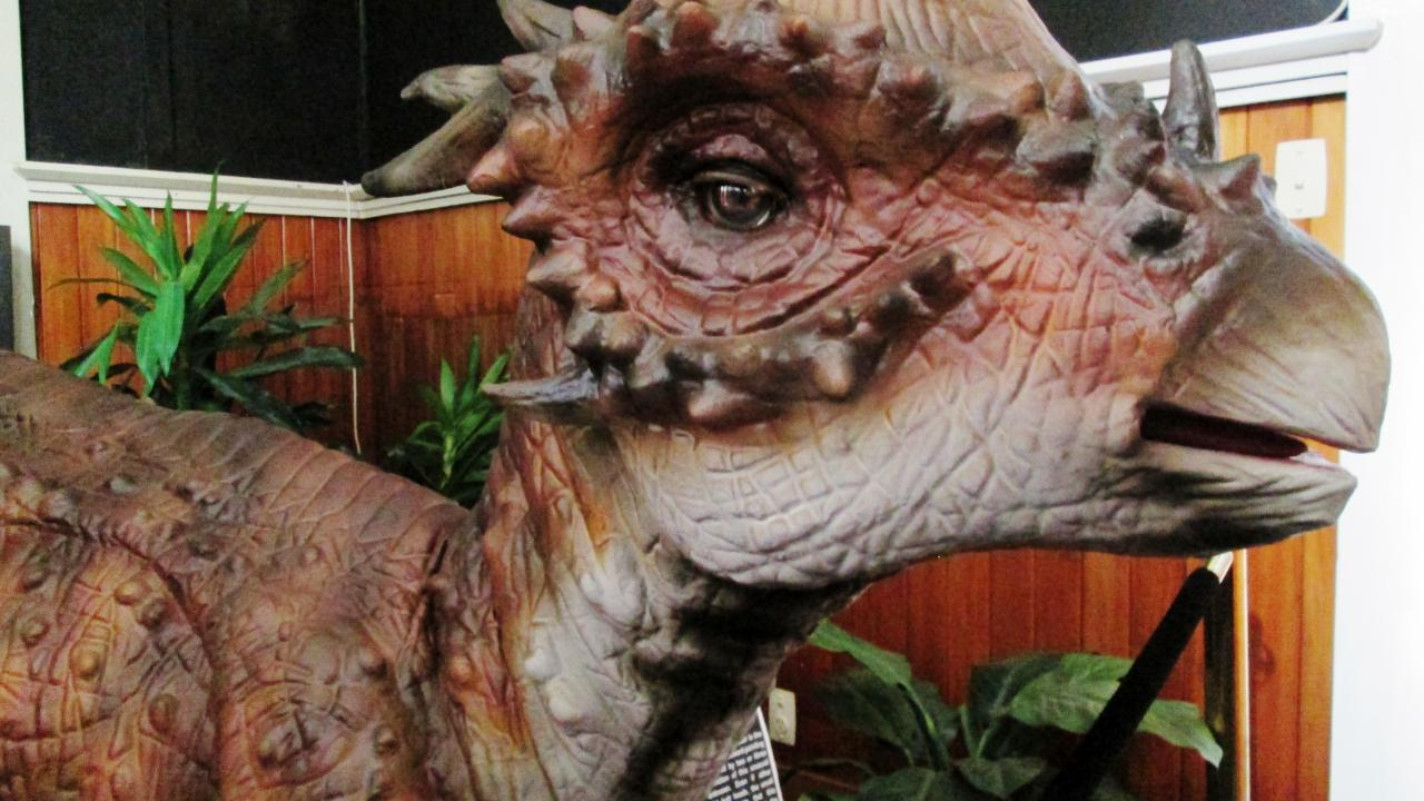 Our very cute Stygimoloch dinosaur.