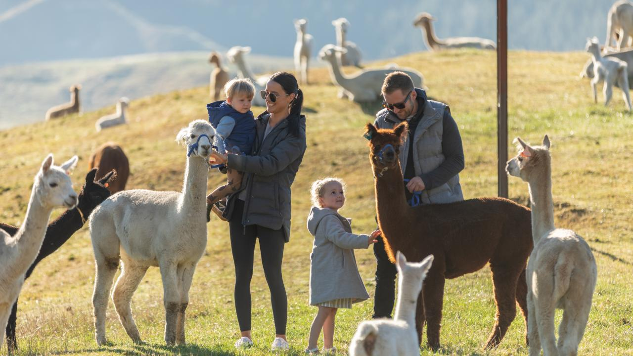 Family Fun, come join us for some alpaca fun