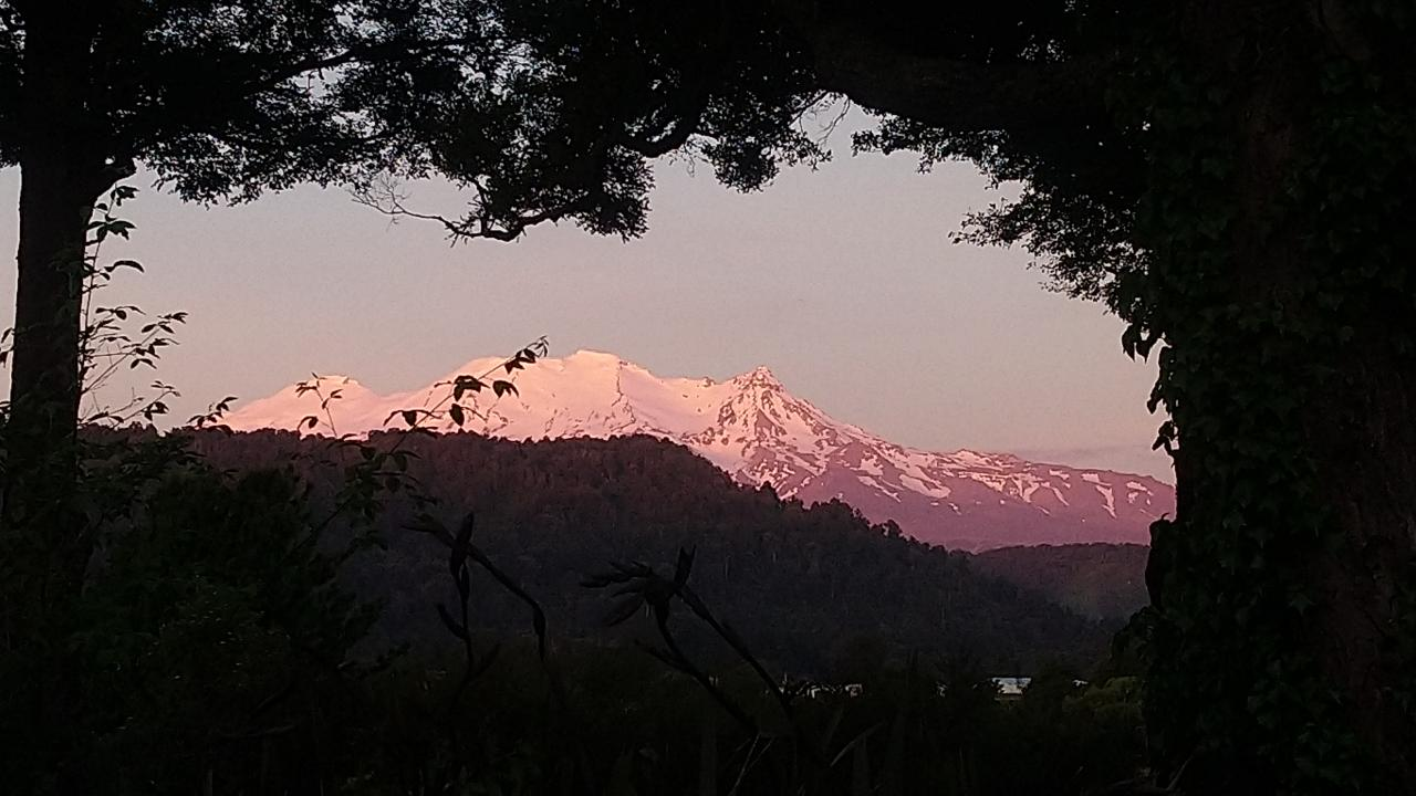 View of Mt Ruapehu from our garden.