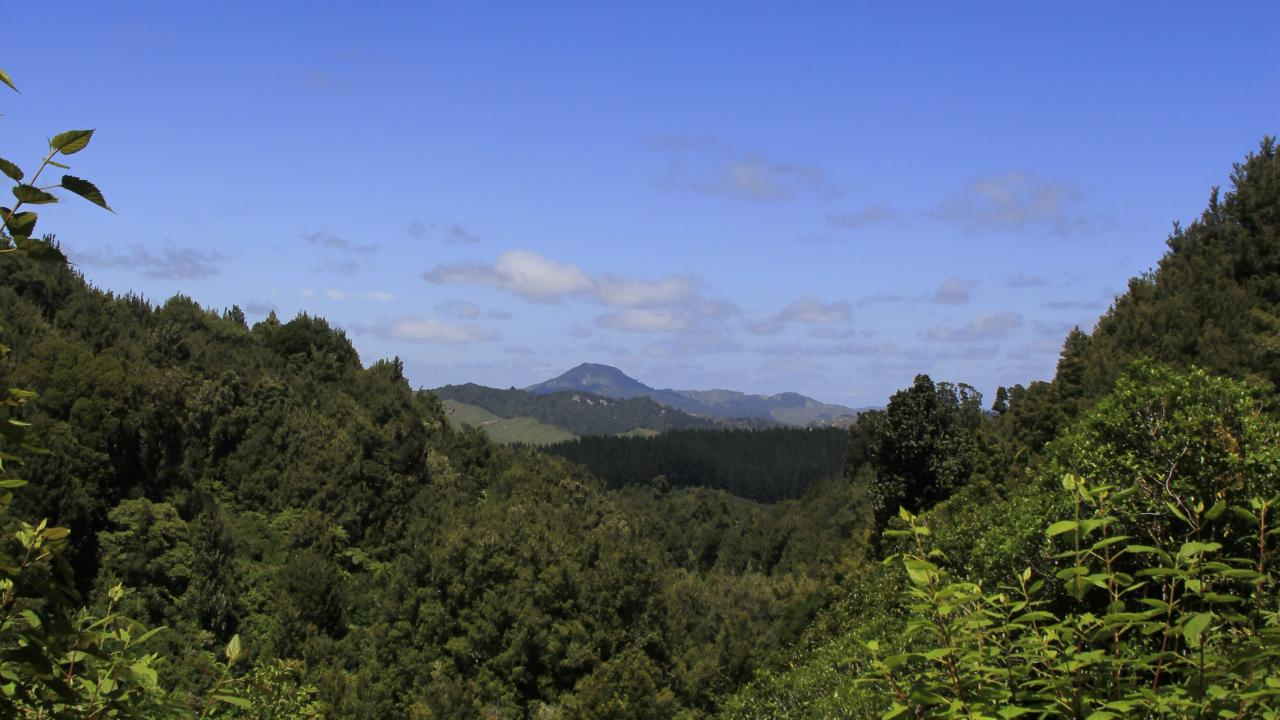 View from the Timber Trail