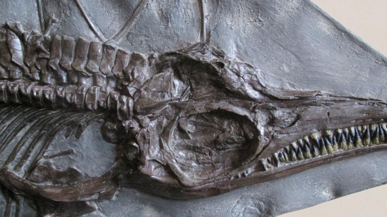 We also have marine reptiles on display.