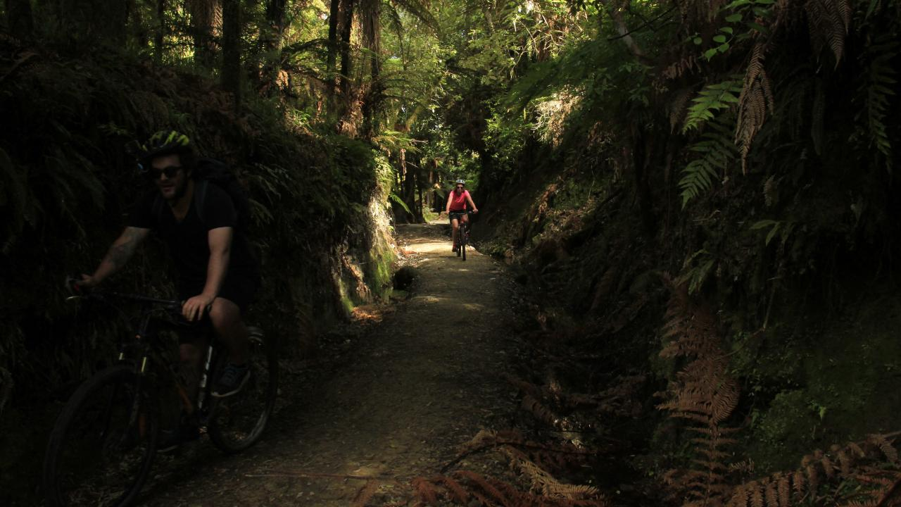 Riding through the Pureora Forest