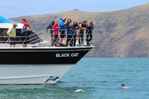 Akaroa Harbour Nature Cruises (Black Cat Cruises)