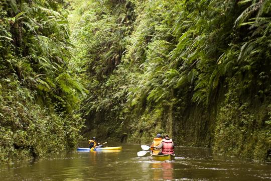 Exploring a side stream on the Whanganui River