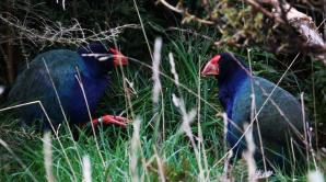 City and Wildlife Tour - Ōtepoti   Dunedin New Zealand official website