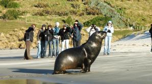 Elm Wildlife Tours - Ōtepoti | Dunedin New Zealand official website