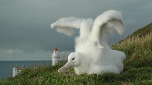 Royal Albatross Centre - Ōtepoti | Dunedin New Zealand official website