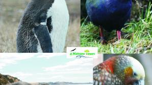 4 Nature - Ōtepoti | Dunedin New Zealand official website