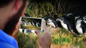 Blue Penguins Pukekura - Ōtepoti | Dunedin New Zealand official website